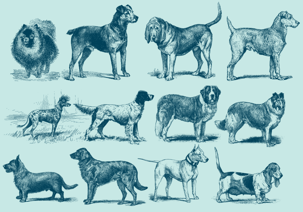 vintage2520blue2520dog2520illustrations